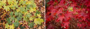 westonbirt-leaves.jpg